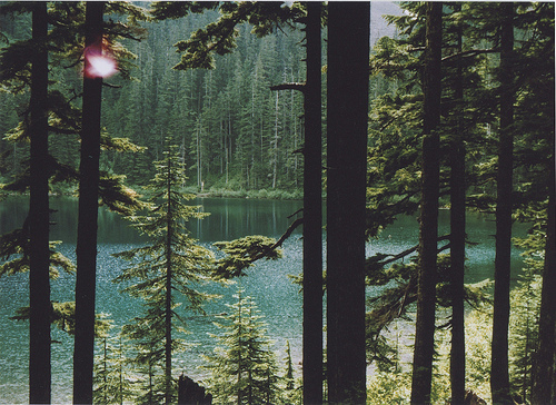 lake-trees